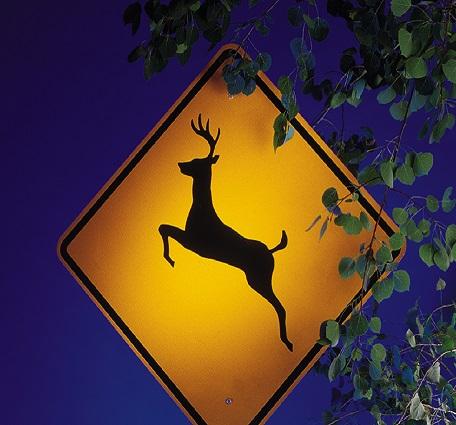 deer-crossing-21