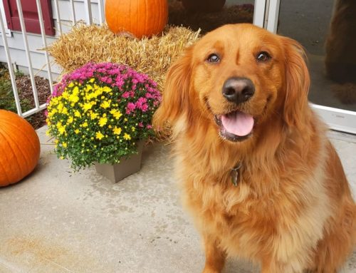 Fall Safety for your pets